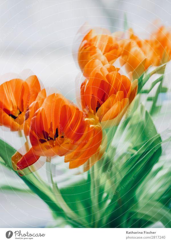Orange Blüten Natur Sommer Pflanze schön grün weiß rot Blume Blatt Winter Herbst gelb Frühling Kunst orange