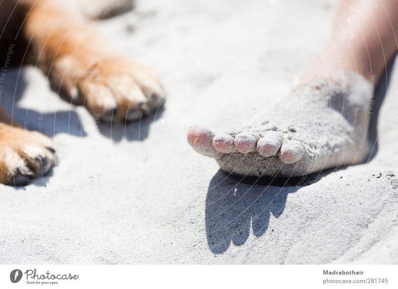 Fuß und Pfote Hund Mensch Jugendliche Ferien & Urlaub & Reisen Sommer Mädchen Strand Tier ruhig Erholung Leben Sand Zusammensein liegen einzigartig