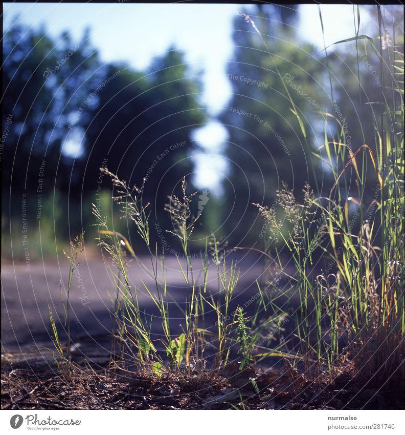 feine Stille Garten Kunst Natur Pflanze Tier Sommer Schönes Wetter Wildpflanze Wiese entdecken Erholung glänzend Wachstum nachhaltig natürlich Stimmung