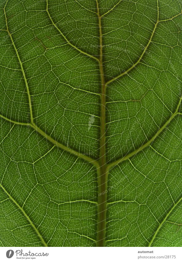 green surface Blatt grün Baum Zoomeffekt Hintergrundbild Natur flach Zimmerpflanze Detailaufnahme Strukturen & Formen tree leaf blattoberfläche Pflanze