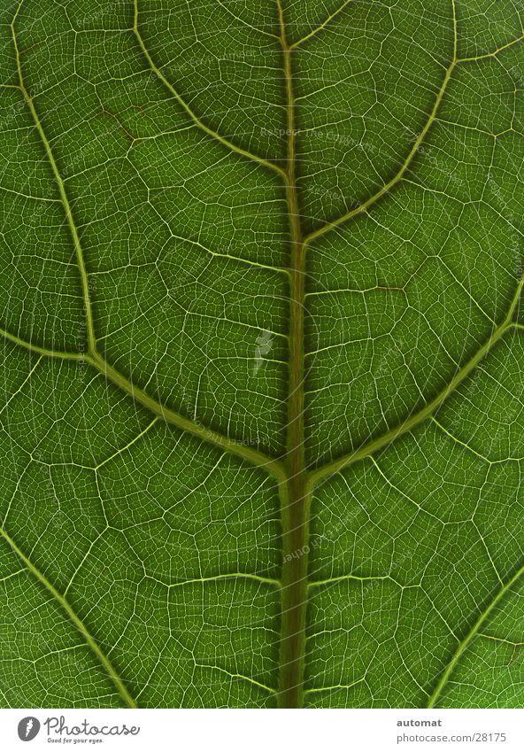 green surface Natur Baum grün Pflanze Blatt Hintergrundbild flach Zimmerpflanze Zoomeffekt