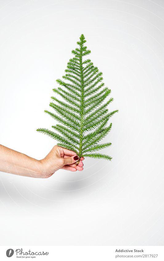 Hand mit Tannenzweig Weihnachten & Advent Dekoration & Verzierung Ast künstlich klein grün Tradition Kugel Mensch Feste & Feiern Winter heimwärts Geschenk