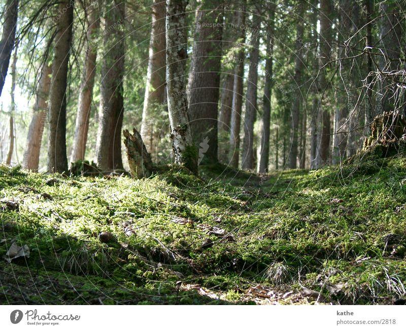waldwelten01 Baum grün Wald
