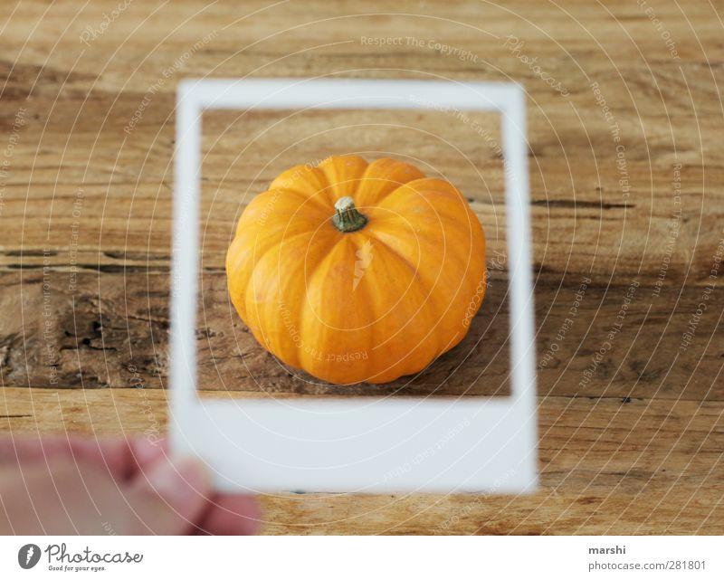Kürbiszeit Lebensmittel Gemüse Ernährung Essen orange Halloween Polaroid Rahmen Kürbisgewächse Kürbissuppe Farbfoto Innenaufnahme Detailaufnahme