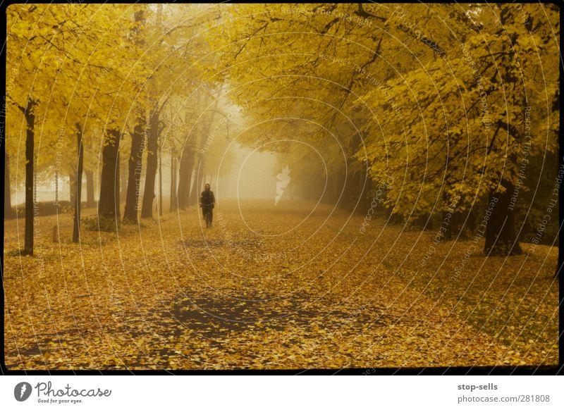 Mitten im Laubfrosch Pflanze Einsamkeit ruhig Wald Erholung gelb Umwelt Straße kalt Herbst Wege & Pfade Traurigkeit Park Nebel Idylle Tunnel