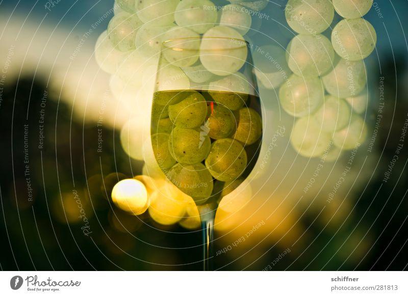 Dionysos' Rausch Natur Pflanze Sonne gelb Frucht gold Lebensmittel Ernährung Schönes Wetter Getränk Wein Kitsch genießen Lebensfreude Doppelbelichtung