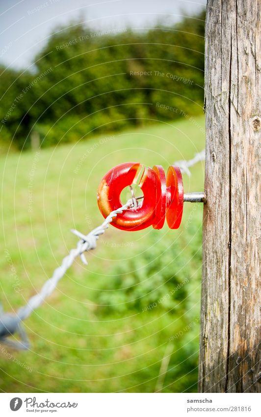 eingezäunt Landwirtschaft Forstwirtschaft Wiese Tier Nutztier Kuh grün rot Zaun Zaunpfahl umfrieden Draht Drahtzaun Stacheldraht Stacheldrahtzaun Elektrozaun