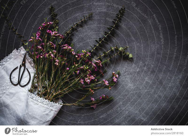 Blumen auf schwarzem Hintergrund. Flache Verlegung, Draufsicht Hintergrundbild Schere Liebe Konsistenz Blütenblatt Geschenk Valentinsgruß natürlich geblümt