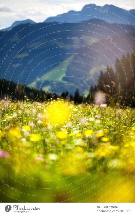 Alpenwiese Natur Ferien & Urlaub & Reisen Pflanze grün Sommer Blume Landschaft Berge u. Gebirge Umwelt gelb Wiese Gras Tourismus Idylle ästhetisch Blühend