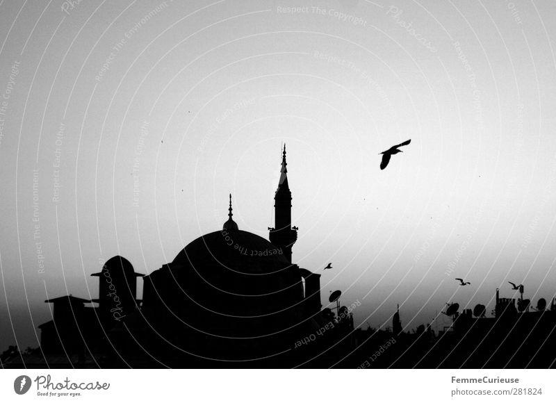 Istanbul. Stadt Hauptstadt Hafenstadt Altstadt Sehenswürdigkeit Wahrzeichen ästhetisch Stolz Moschee Gebet Religion & Glaube Minarett Vogel Horizont Himmel