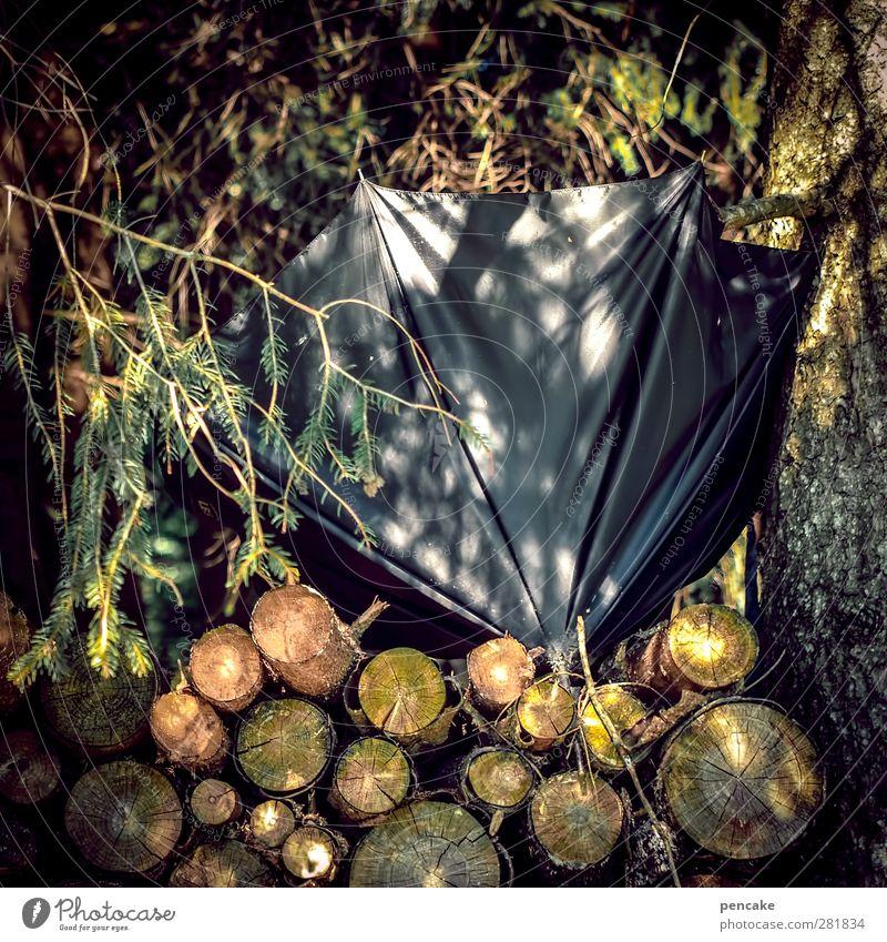 sunney Natur Baum schwarz Wald Holz Schönes Wetter kaputt Regenschirm vergessen Tannenzweig Holzstapel