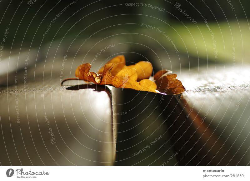 Aufm Bänkle .. Natur Pflanze Blatt Umwelt Herbst Holz braun natürlich authentisch weich einfach Bank trocken dünn Grünpflanze Wildpflanze