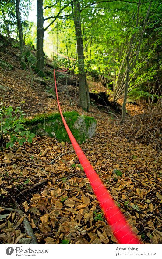 der rote Faden Umwelt Natur Landschaft Pflanze Sommer Baum Sträucher Moos Wald Felsen Stein braun gelb grün Nähgarn Schnur Leitfaden Baumstamm Zweige u. Äste