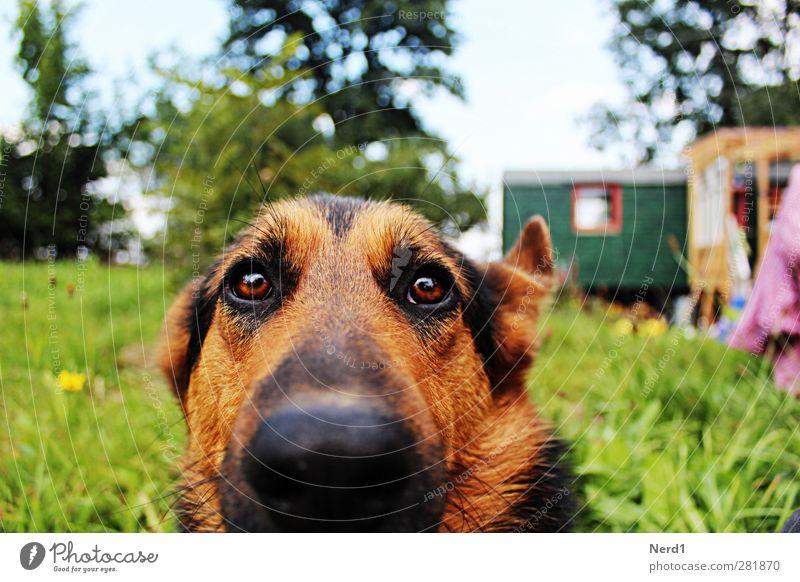 Luzi Natur Gras Haustier Hund berühren warten schön blau grün Farbfoto Außenaufnahme Starke Tiefenschärfe Totale Tierporträt Blick in die Kamera
