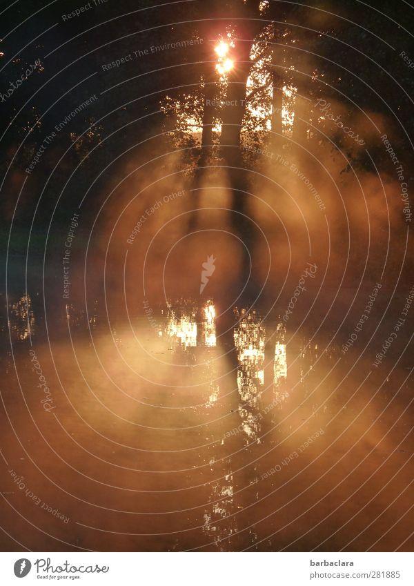 Wenn ein neuer Tag anbricht Wasser Sonne Herbst Nebel Baum Teich See leuchten gold schwarz weiß Gefühle Stimmung Sehnsucht Beginn Frieden Hoffnung Natur ruhig