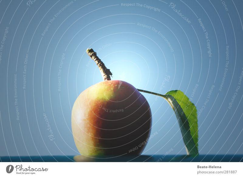 Paradiesisch Natur blau grün rot Herbst Garten braun Frucht leuchten Ernährung Apfel genießen lecker Paradies Bühnenbeleuchtung Apfel der Erkenntnis