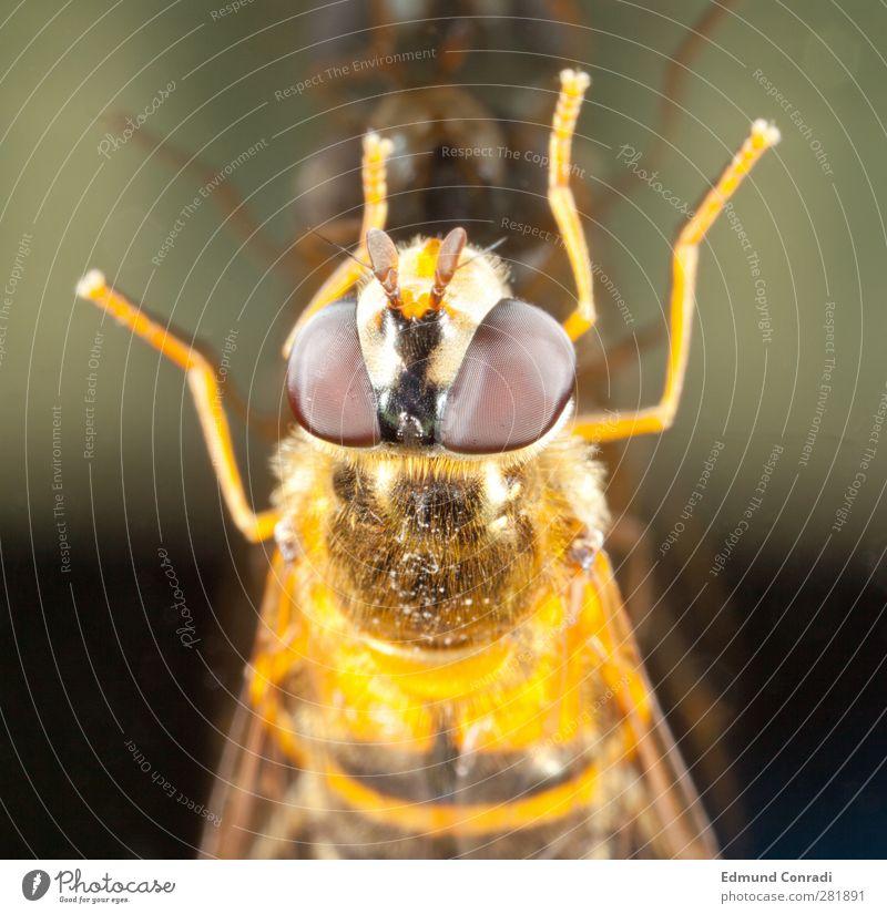 Spiegelbild Glas Auge Natur Facettenauge Qualität Tierporträt Farbfoto Reflexion & Spiegelung Blick in die Kamera