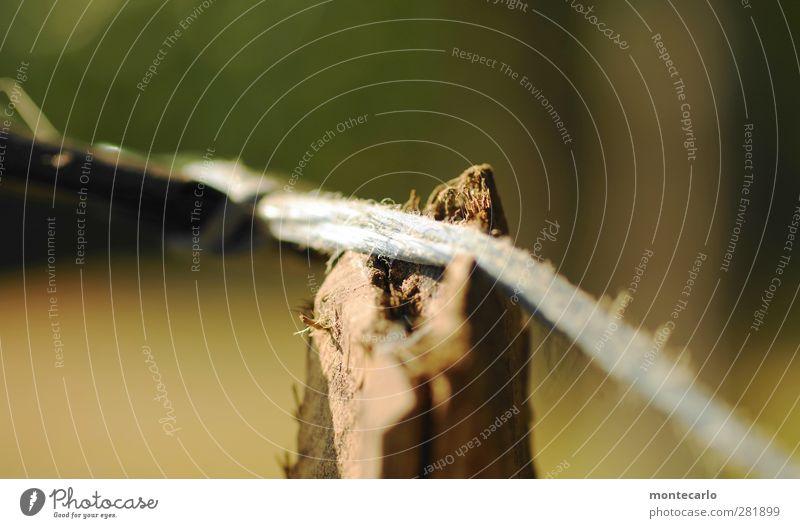 provisorium Umwelt Natur Baum Seil Weidezaun Holz Kunststoff alt dünn authentisch natürlich Spitze trocken mehrfarbig Farbfoto Nahaufnahme Detailaufnahme