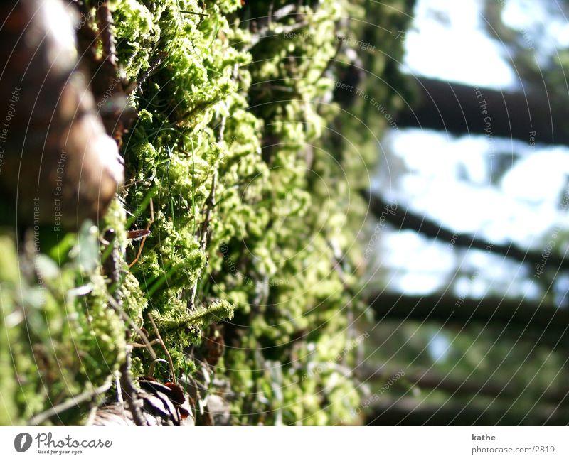 waldwelten03 grün Baum Tannennadel Moos