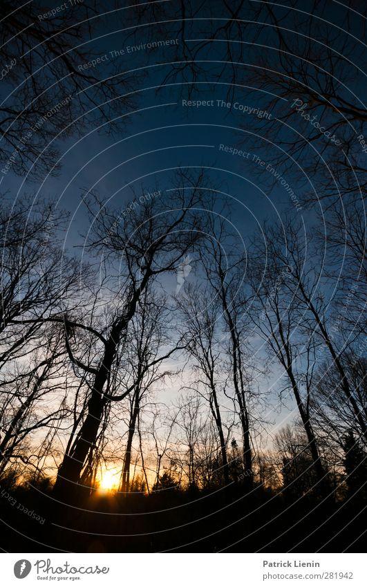 Wintersleep Natur blau Pflanze Baum Sonne Landschaft Wald Umwelt Herbst Freiheit Luft Stimmung Wetter Klima Schönes Wetter