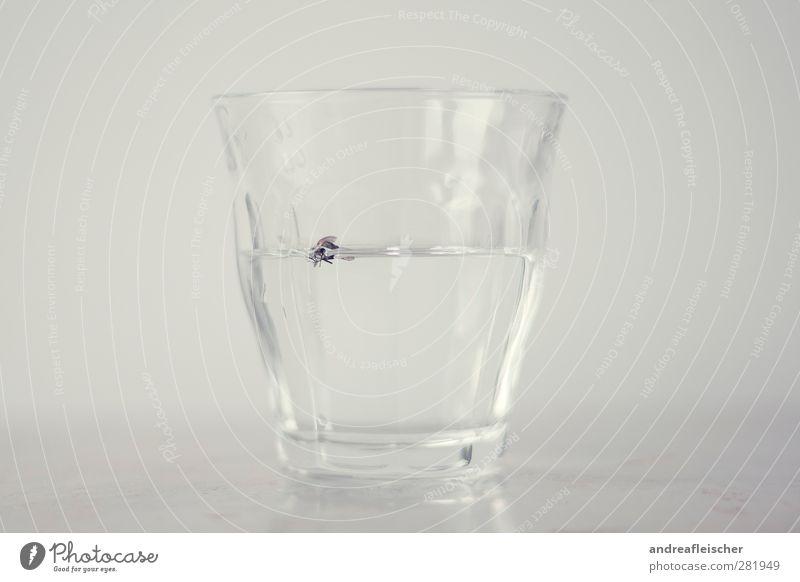 fliegenwasser. Lebensmittel Fingerfood Trinkwasser Geschirr Glas Metall Wasser ästhetisch Kunst Ekel Fliege Reflexion & Spiegelung grau sanft ruhig