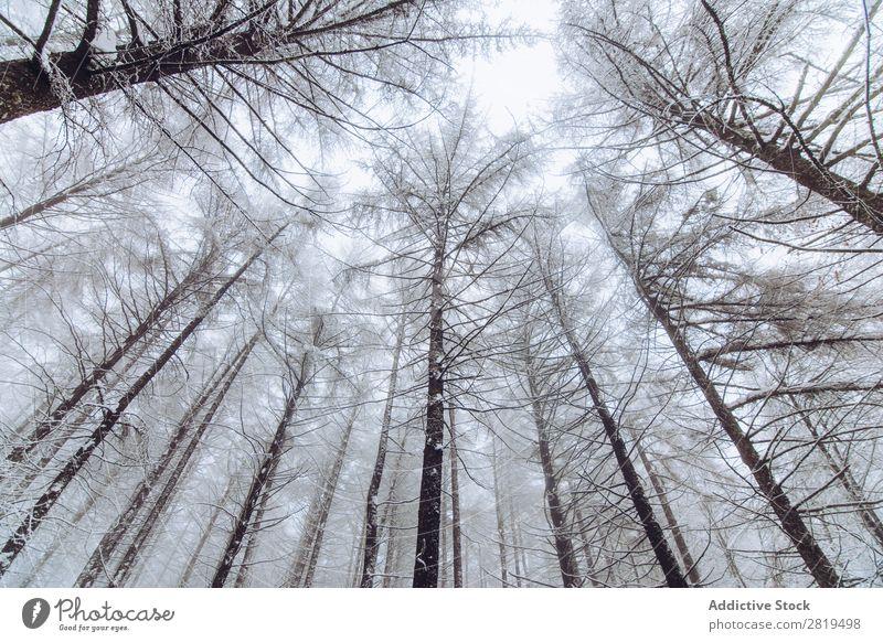 Wald im Wintertag Natur Schnee kalt Landschaft weiß Frost Baum Jahreszeiten Szene schön Wetter Tag Eis Schneefall Ferien & Urlaub & Reisen frieren Licht Umwelt