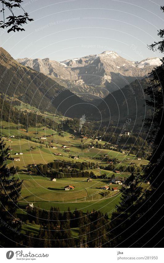 Abendlicht Wohlgefühl Erholung ruhig Tourismus Freiheit Sommer Berge u. Gebirge wandern Natur Landschaft Schönes Wetter Baum Tanne Felsen Alpen wildhorn Gipfel