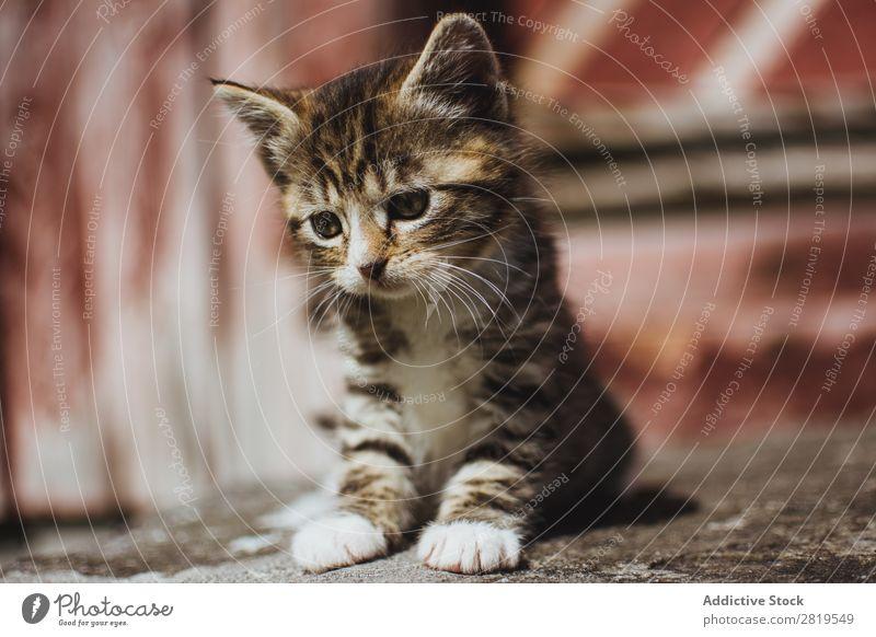 Niedliche kleine Katze auf dem Boden Katzenbaby niedlich sitzen Tier Haustier