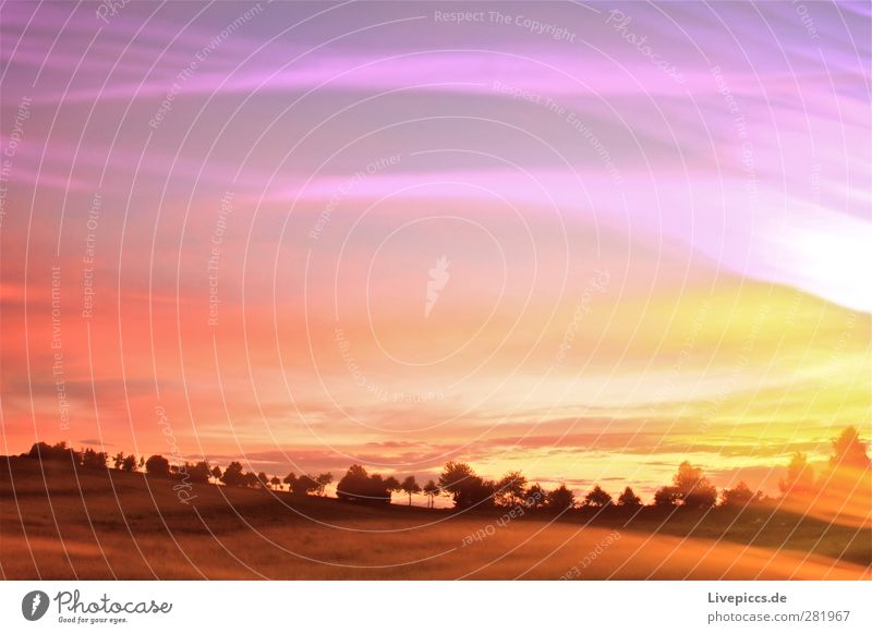 Farben der Dämmerung? Himmel Natur Sommer Pflanze Baum Sonne Wolken Landschaft gelb Umwelt Gras Feld orange leuchten Schönes Wetter Sträucher