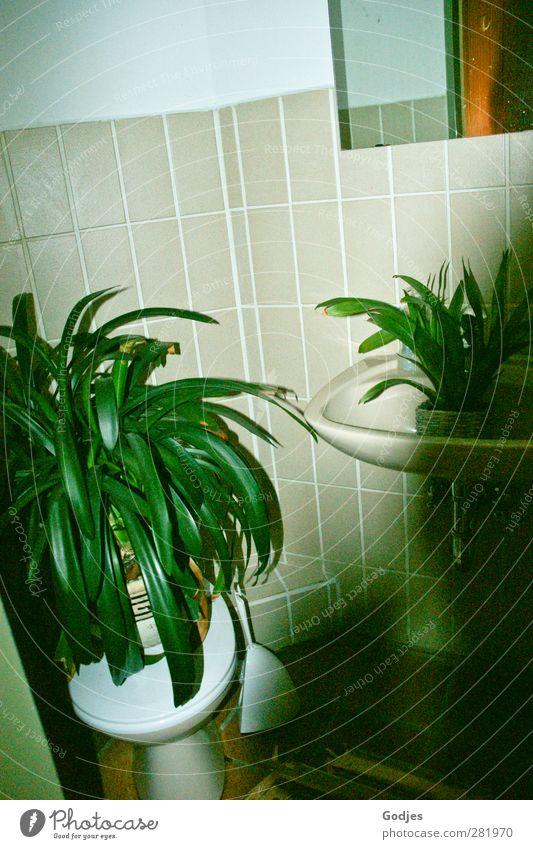 Pflanzen stehend auf Toilette und im Waschbecken vor einer gekachelten Wand Häusliches Leben Wohnung einrichten Bad Natur Grünpflanze Topfpflanze Glas