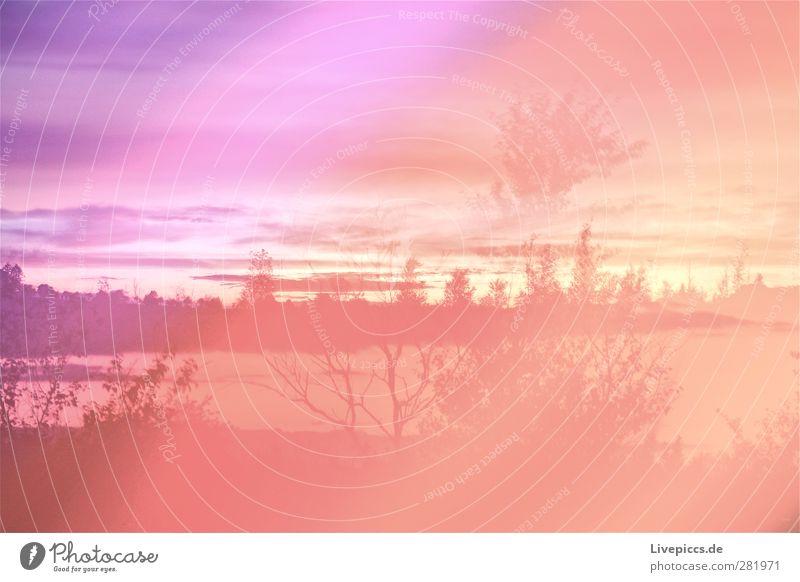 Farben der Dämmerung? Natur blau Sommer Pflanze Baum Wolken Landschaft Umwelt Gras Feld orange leuchten Schönes Wetter Sträucher violett Lichtspiel