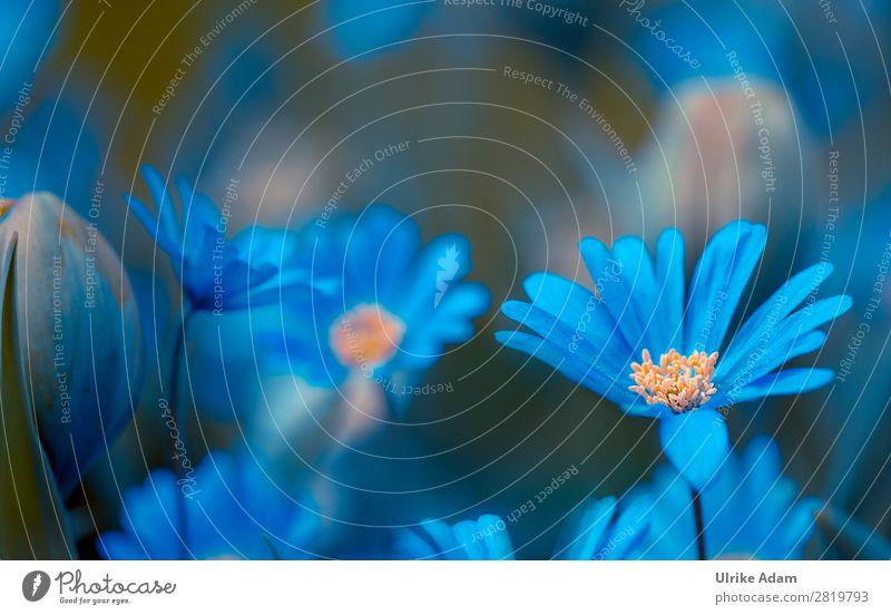 Blaue Blumen Natur Pflanze blau Farbe Erholung ruhig Leben Blüte Frühling Garten Zufriedenheit Dekoration & Verzierung Park Blühend Ostern