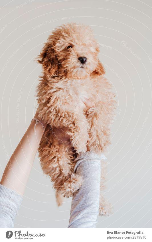 Frau Mensch Hund Jugendliche Junge Frau schön Hand Haus Tier Freude Gesicht Lifestyle Erwachsene Liebe feminin Glück