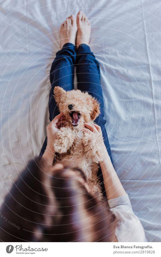 Porträt eines süßen braunen Spielzeugpudels mit Besitzerin Lifestyle Freude Glück schön Freizeit & Hobby Freiheit Haus Mensch feminin Baby Junge Frau