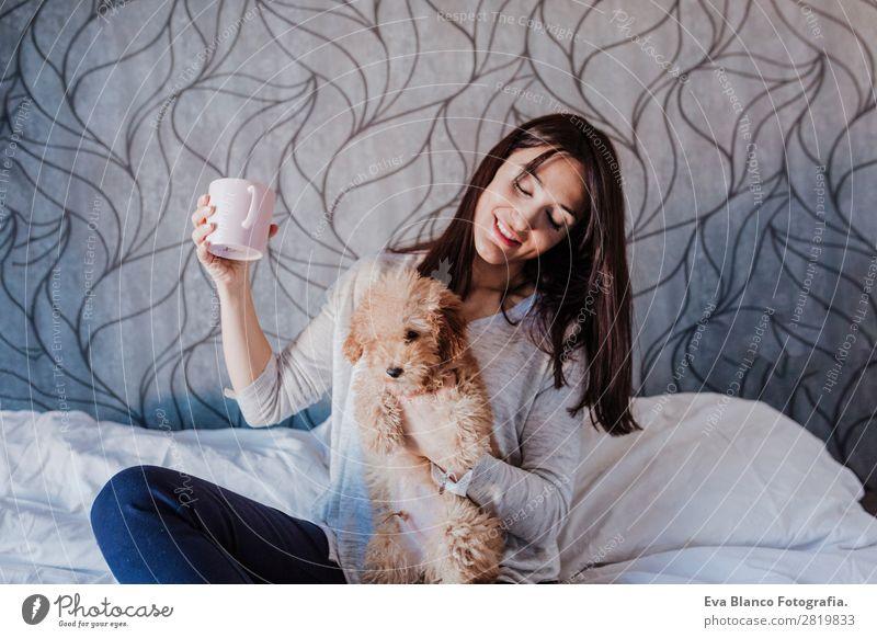 Süßer brauner Zwergpudel mit seinem Besitzer zu Hause. Kaffee Lifestyle Freude Glück schön Freizeit & Hobby Freiheit Mensch feminin Junge Frau Jugendliche