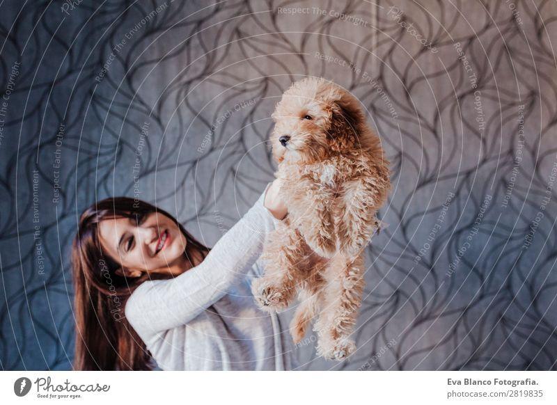 Süßer brauner Zwergpudel mit seinem Besitzer zu Hause. Lifestyle Freude Glück schön Freizeit & Hobby Freiheit Mensch Junge Frau Jugendliche Erwachsene
