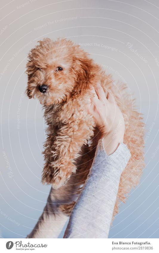 Frau Mensch Hund Jugendliche Junge Frau schön Hand Haus Tier Freude Gesicht Lifestyle Erwachsene Liebe Glück klein