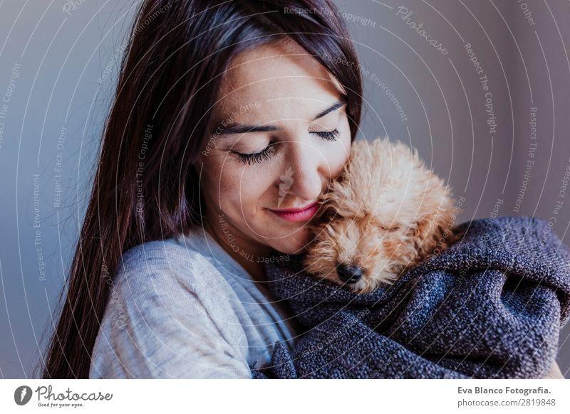 Porträt eines süßen braunen Spielzeugpudels mit Besitzerin Lifestyle Freude Glück schön Freizeit & Hobby Freiheit Haus Mensch feminin Junge Frau Jugendliche