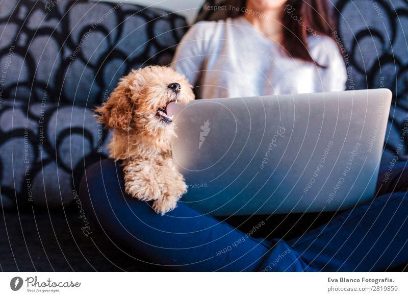 Süßer Zwergpudel mit seinem jungen Besitzer zu Hause. Lifestyle Freude Glück schön Sofa Handy PDA Notebook Technik & Technologie Mensch feminin Junge Frau