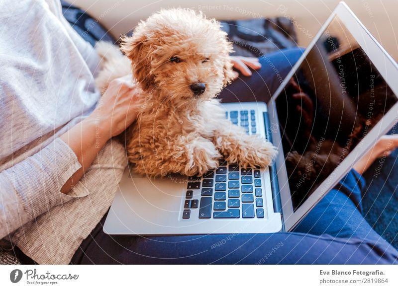 Frau Mensch Hund Jugendliche Junge Frau schön Hand Haus Tier Freude Lifestyle Erwachsene Liebe Glück klein braun