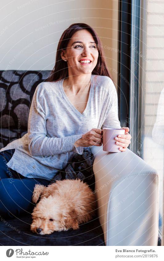 Porträt von Cute toy poodle mit seinem Besitzer zu Hause Kaffee Lifestyle Freude Glück schön Freizeit & Hobby Freiheit Sofa Mensch feminin Junge Frau