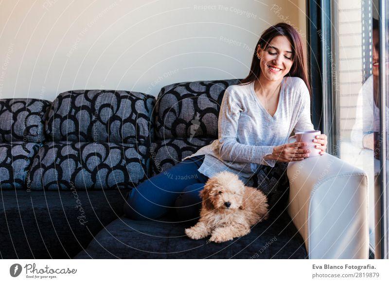Porträt von Cute toy poodle mit seinem Besitzer Kaffee Lifestyle Freude Glück schön Freizeit & Hobby Freiheit Haus Sofa Mensch feminin Baby Junge Frau