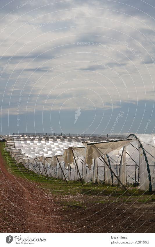 unter Folie Natur weiß Sommer Wolken Landschaft Wärme hell Feld Wachstum Schönes Wetter Hügel Nutzpflanze Gewächshaus Gärtnerei anbauen Folienbeet