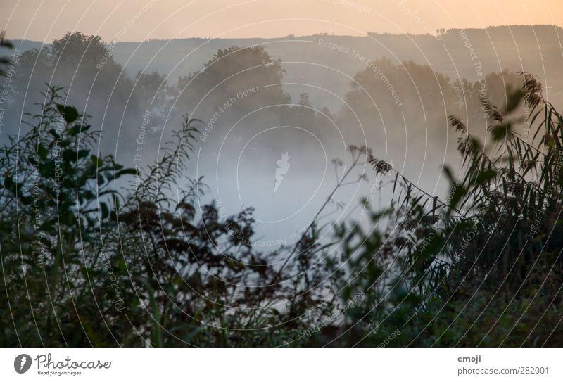Nebelsee Natur Pflanze Landschaft Umwelt kalt Herbst natürlich Sträucher Nebelmeer