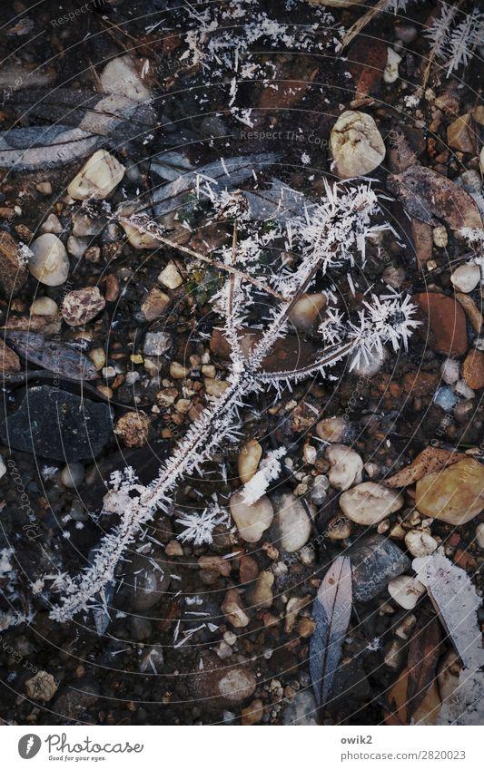 Weltverloren Umwelt Natur Pflanze Winter Eis Frost Sträucher Zweig Seeufer Stein frieren liegen dunkel kalt Spitze unten trösten ruhig Traurigkeit Sorge Trauer