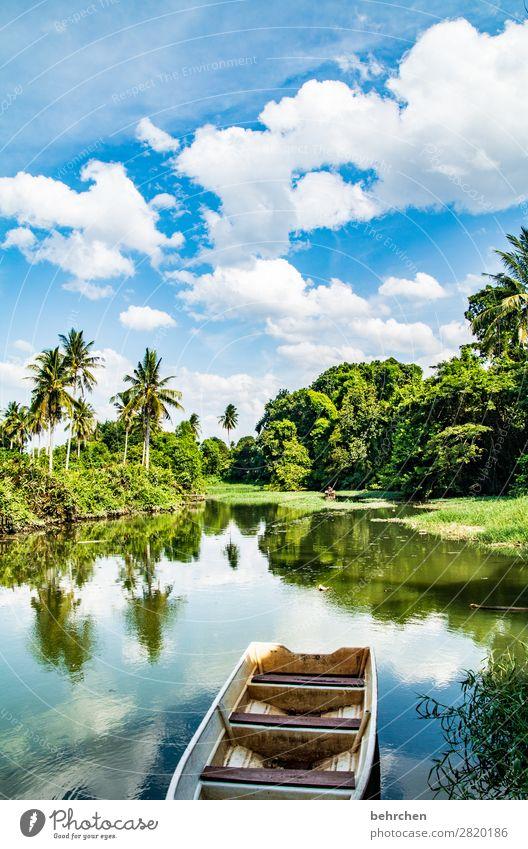 träumzeit Ferien & Urlaub & Reisen Tourismus Ausflug Abenteuer Ferne Freiheit Umwelt Natur Landschaft Himmel Wolken Pflanze Baum Sträucher Blatt Palme Urwald