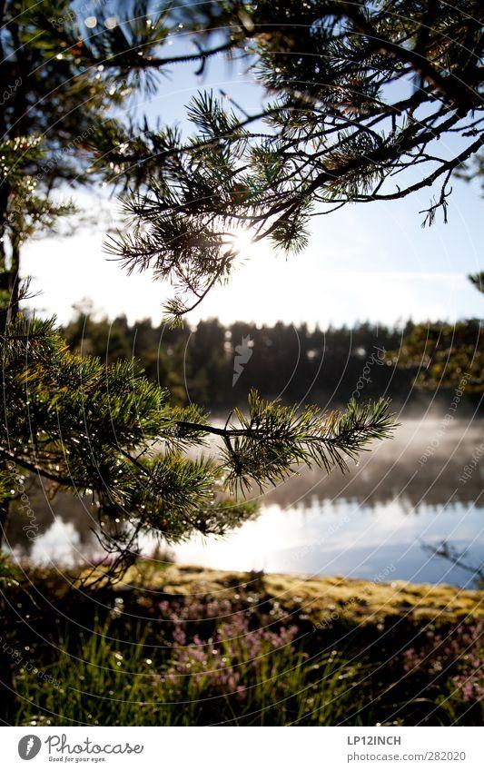 Schwedische Ansichten Ferien & Urlaub & Reisen Tourismus Ausflug Sommerurlaub wandern Umwelt Natur Wasser Schönes Wetter Pflanze Baum Wald Schweden genießen