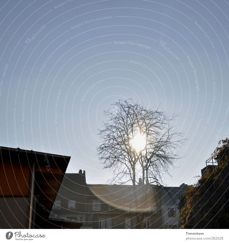 The long way home Himmel blau Stadt Baum Sonne schwarz Haus Gefühle Frühling Gebäude träumen Wohnung Zufriedenheit Zukunft Häusliches Leben ästhetisch