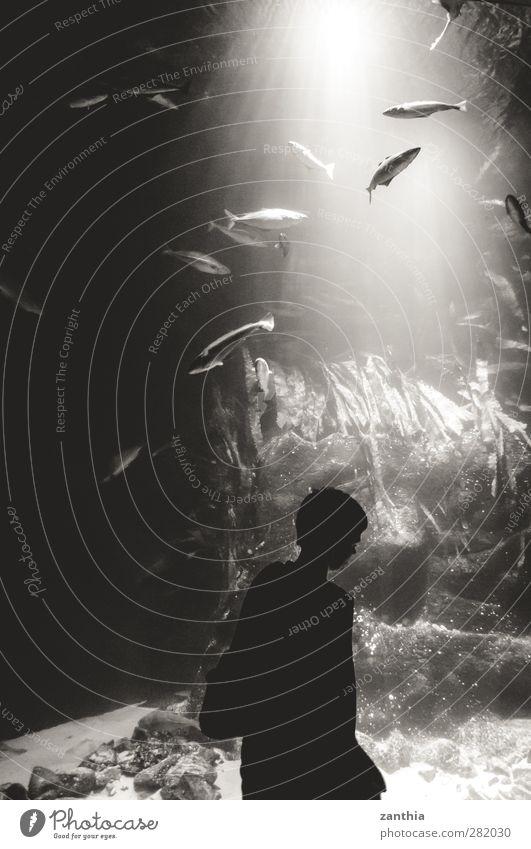 Aquarium Natur Ferien & Urlaub & Reisen weiß ruhig schwarz Ferne Bewegung Kunst Schwimmen & Baden Stimmung Deutschland groß Tourismus ästhetisch Idylle Fisch