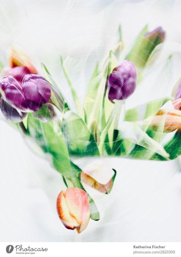 Tulpenstrauß malerisch Natur Sommer Pflanze weiß rot Blume Blatt Winter Herbst gelb Blüte Frühling Kunst orange rosa Dekoration & Verzierung